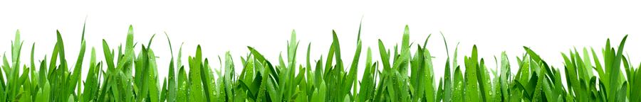 Fibre Verte - Devenez Distributeur