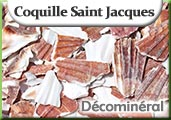 coquille-saint-jacques