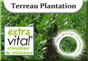 Terreau Plantation Extravital
